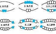 婴儿宝宝长牙顺序图解